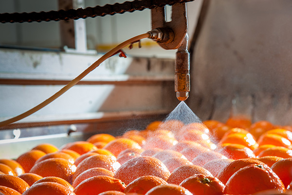 oranges in factory